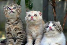 • Cats • / I'm a cat person <3