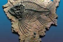 Showy fossils