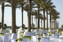 The Bride - Yas Viceroy Abu Dhabi / Start Planning