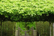 Outdoor living and landscape ideas / Outdoor designs and gardening ideas!