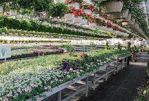 Area Garden Centers