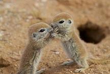 Baby Animals make me HAPPY