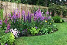 kerti virágozás