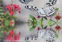 farfalle/butterflies