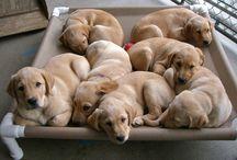 Puppies / by Paula ☮