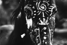 Native American Horses / They just look kinda pretty!
