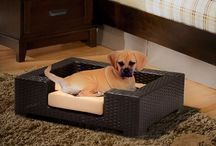 Cool and Comfy Pet Beds / by Brett Fowler