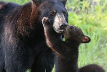 momma's love