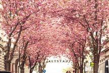 가로수 Street Tree