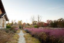 Grasses / Native Grasses of Virginia