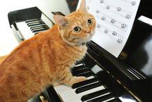 Imagenesdegatos.net / Visita nuestra web para encontrar Imágenes y Vídeos de gatos chistosos y tiernos. También puedes leer nuestro Blog y visitar nuestra Tienda de Gatos en línea.