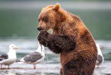 クマさんお食事中