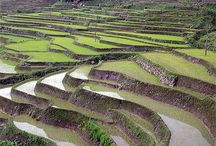 chine / http://www.routard.com/photos/chine/24438-superbes_rizieres.htm