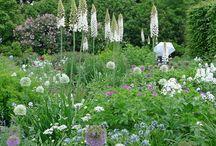 witte cottage tuin