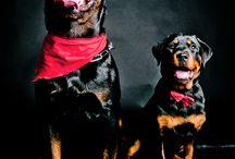 Pet Beauty Shooting / Raccolta di foto di animali domestici