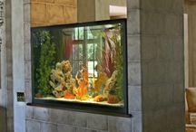 man cave fish tank / man cave / Malawi fish tank/