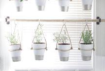 Κήπος με βότανα