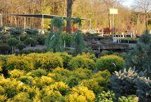 Jardin2m en image / Au Jardin2m on peut compter sur de vastes sélections de vivaces, arbustes, rosiers, conifères et arbres de tous les calibres, et ce, durant toute la saison.