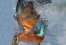 ptáci / různých pěkných ptáků