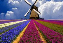 Holland (Netherlands)  / by Luxe Adventure Traveler
