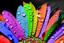 Many colours / by Jon Bennallick