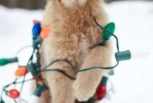 I zvířátka milují Vánoce