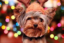 I love Christmas / by Liezel de Jager