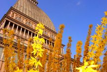 La primavera sboccia a Torino / Torino in fiore, quale momento migliore per visitarla?