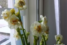 Flowers - Kukkia / Beautiful flowers