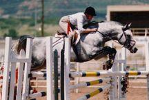 Mannhattan / 1991 Grey 16:2 hh Oldenburg Stallion