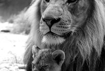 Lions are beautiful  / by LaKeisha James
