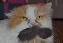 National Hairball Awareness Day / Cats, their people and the fine folks at FURminator celebrate National Hairball Awareness Day with cats, mustaches, grooming, funny videos and more!