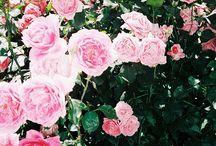 Flores y huerta