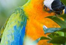 Птицы / Все из жизни и о жизни птиц