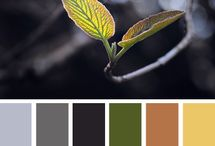 Colour Inspirations / by Maddy Crampton