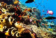 Croisière Plongée en Indonésie / Plongez sur les plus beaux spots d'Indonésie et prolongez votre séjour à Bali !