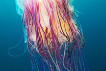 My Jelly Fish Idea's