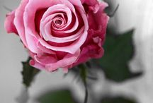 Color pink