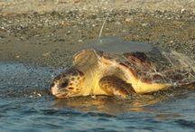 Turtles & Tortoise