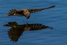 Birds - Petrus van zyl