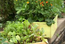 gardening / by Cheryl Bellon