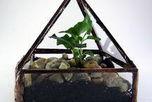 Florárium / Növényházakról
