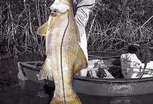 Amazing Fishing Pics / Amazing Fishing Pics