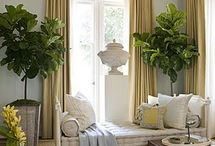 Decorating with House Plants / by Cathie Moros