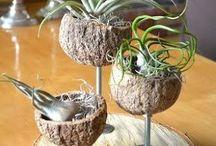 pedaço de madeira com vasos de cascas de coco