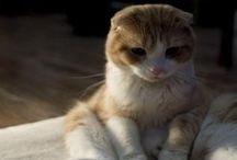 Cutemaus: pets and stuff