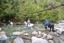 Horseback Riding Chile / Horseback riding through the Andes or temperate rainforest of Chile
