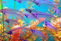 #barrier #reef #fish #sea