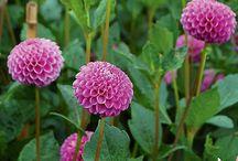 Plant and Flower Varieties  / by Jenny Katatumba