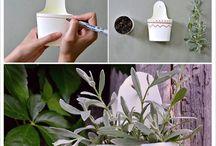 Bellas plantas